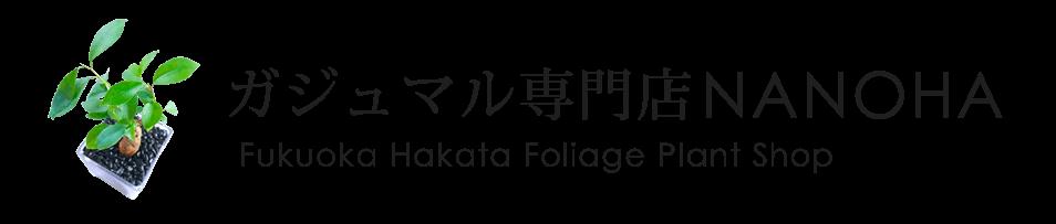 福岡博多のガジュマル専門店NANOHA